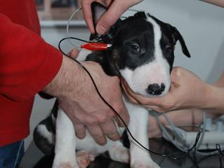 C-čka mají zasebou test sluchu :-)
