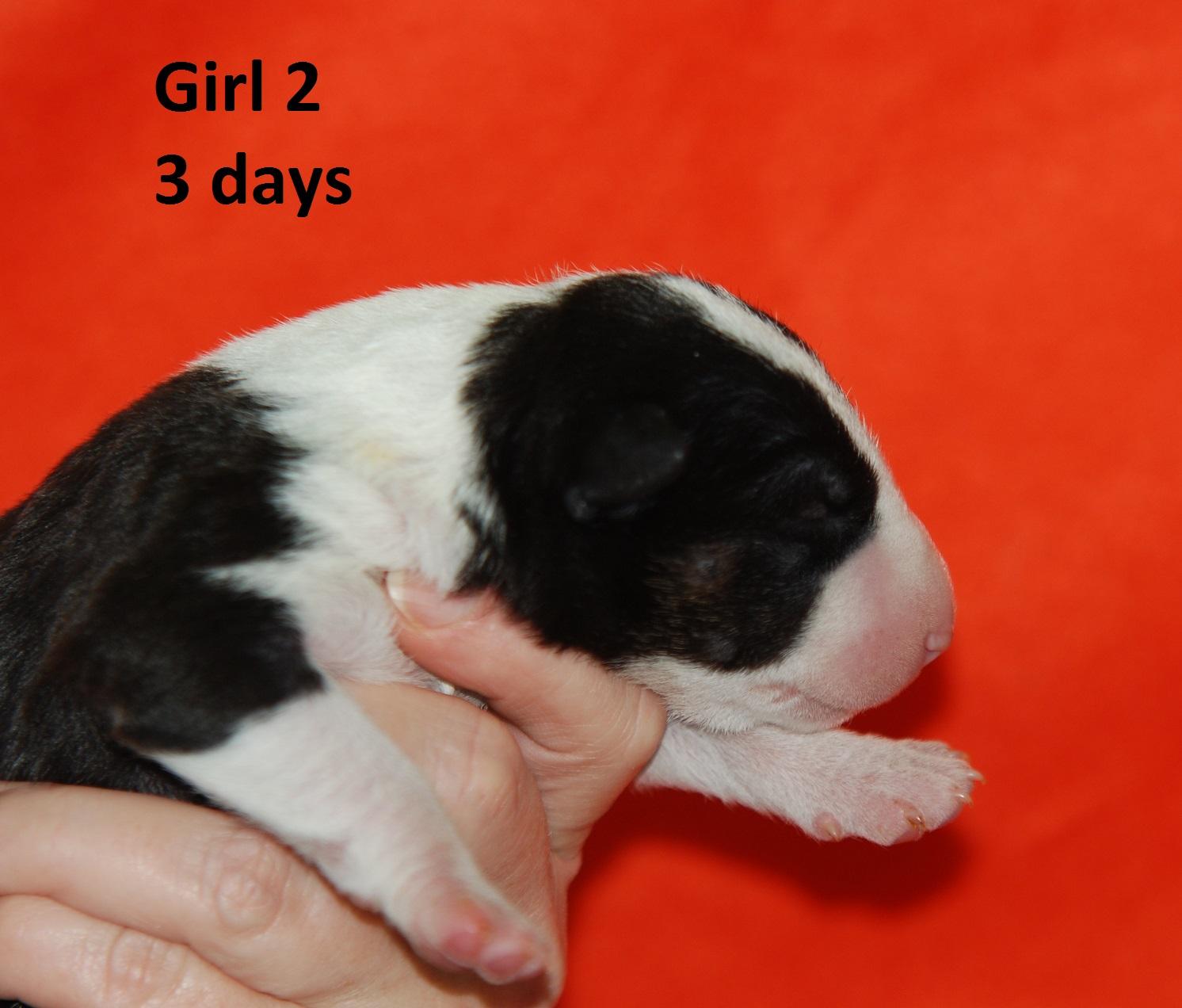 Girl2 (2)
