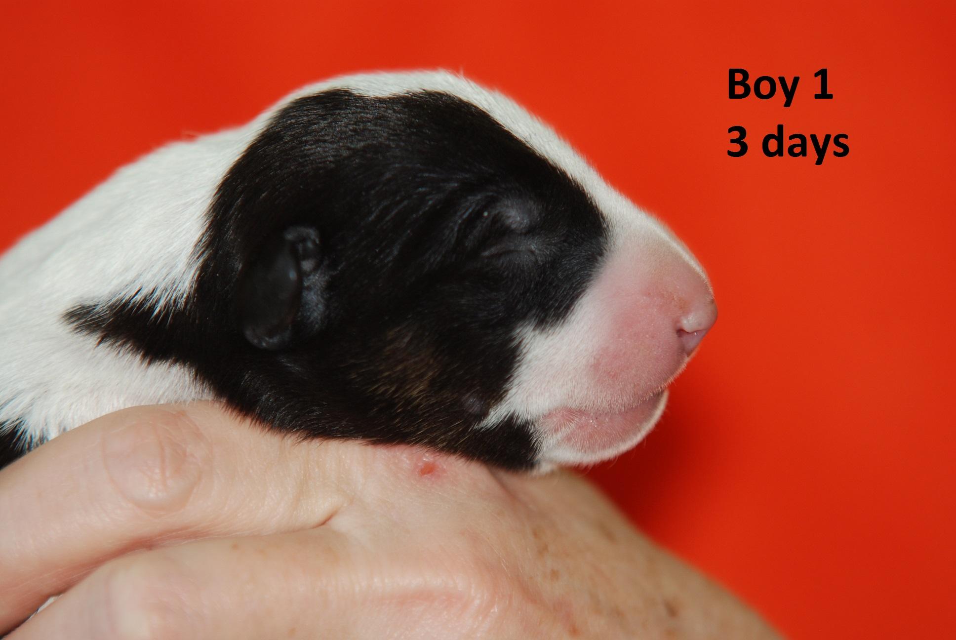 Boy1 (4)