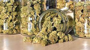 Judge Orders Release of Secret Documents Behind County Award of Five Retail Pot Licenses