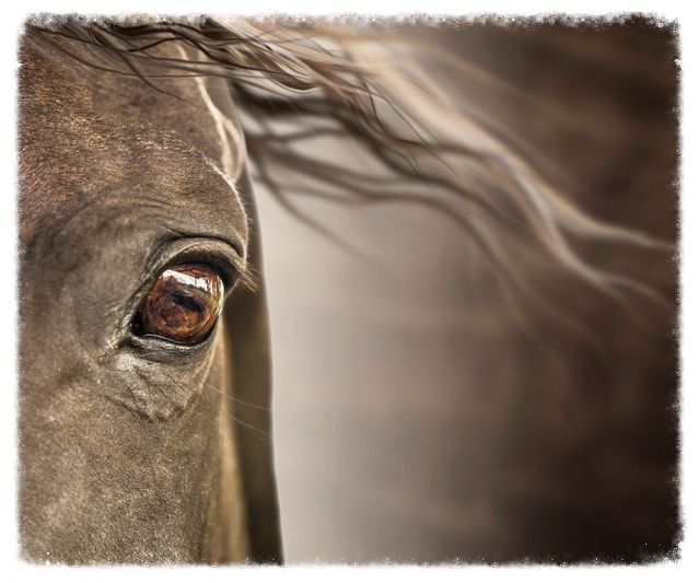horses-big-eyes.jpg.638x0_q80_crop-smart_edited