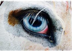 irish-horse-culture270_edited