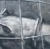 """""""The Canary"""" - detail"""