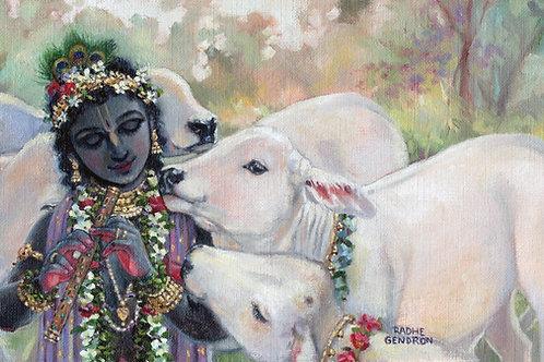 Govinda with his white calves