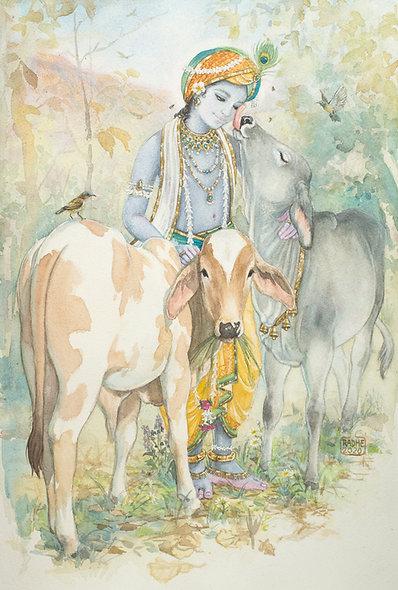 Gopal and bull calves