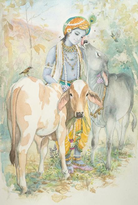 Gopal with bull calves