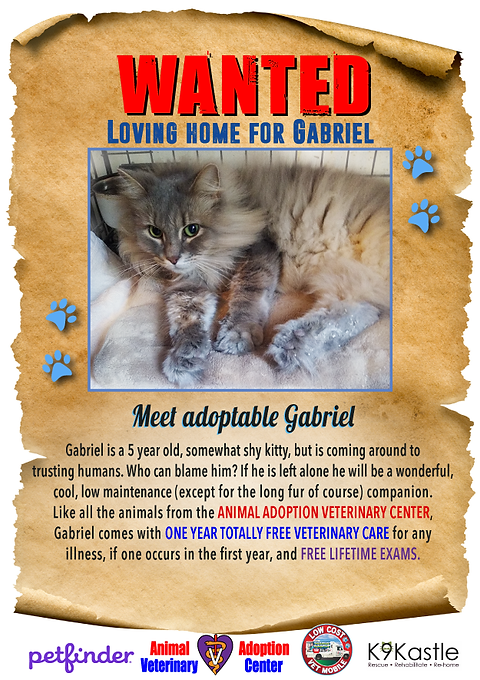 adopt_Gabriel_new_wanted_1.png