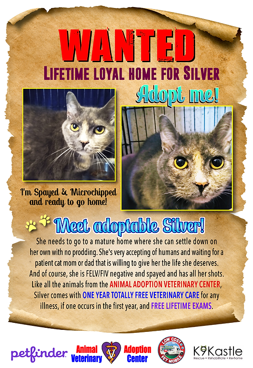 adoptable_silver_oct_11.png