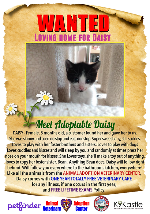 DAISY_WANTED_FLYER_1.png