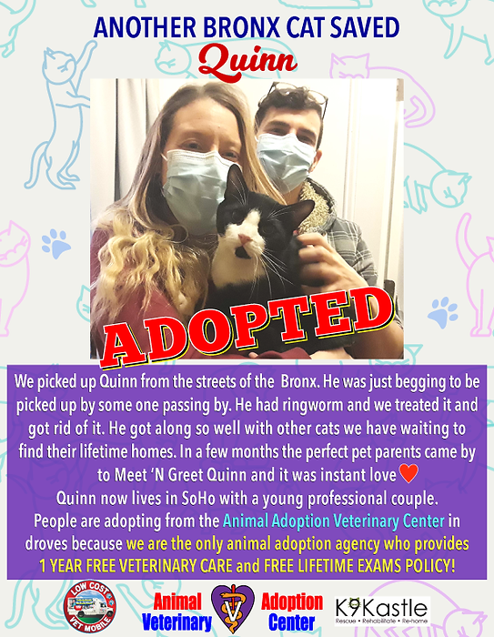 Quinn_adopted_2021.png