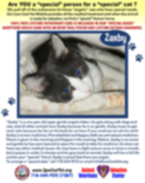 lcvm_special_needs_cats_ZAXBY_3.png