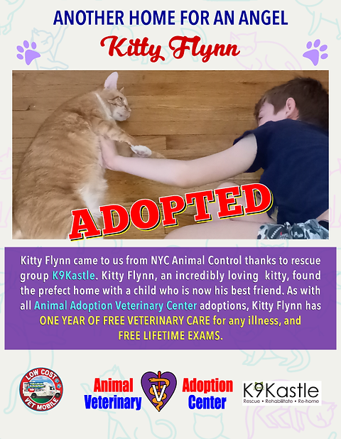 adopted_kitty_flynn_2021.png