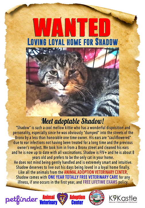 shadow_wanted_flyer_2021.png
