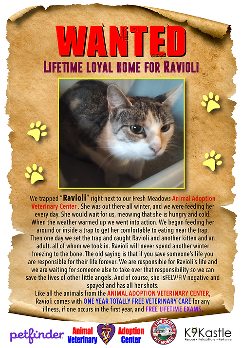 ravioli_wanted_flyer_2.png