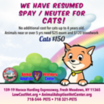 spay_neuter_resumed_for_cats_2020_2.png
