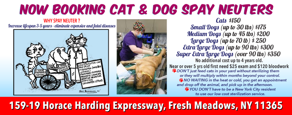 new_spay_neuter_dogs_header.png