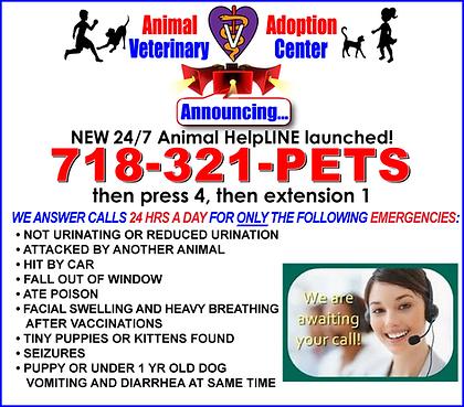 aavc_helpline_2019.png