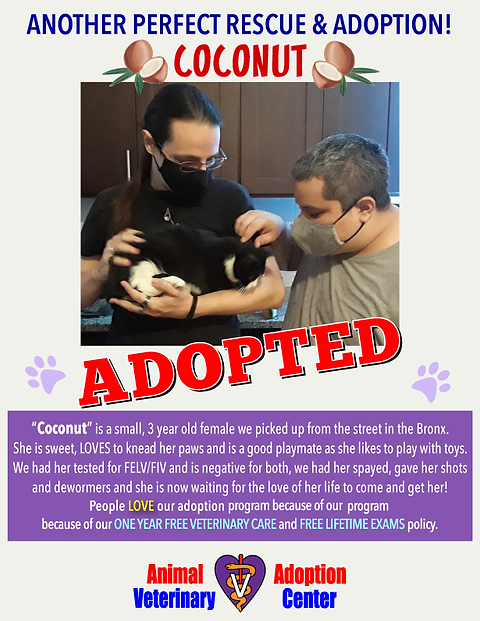 coconut_adopted_poster.png