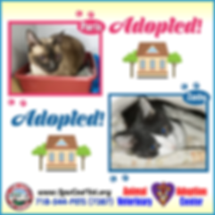 lcvm_special_needs_cats_adopted.png