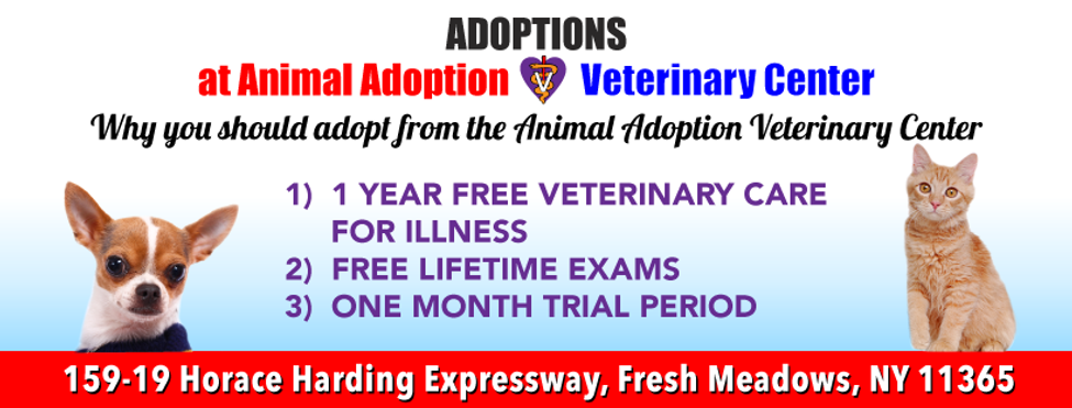 aavc_website_build_ADOPTIONS_1.png