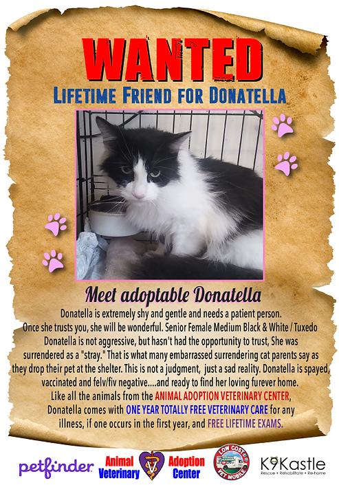 adopt_Donatella_new_wanted_1.png