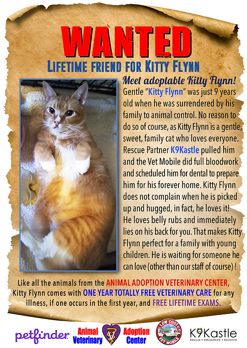 adopt_kitty_flynn_new_wanted.png