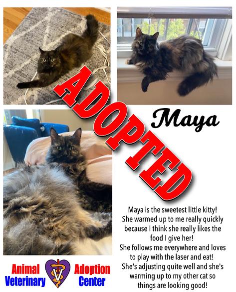adopted_poster_Maya_1.png