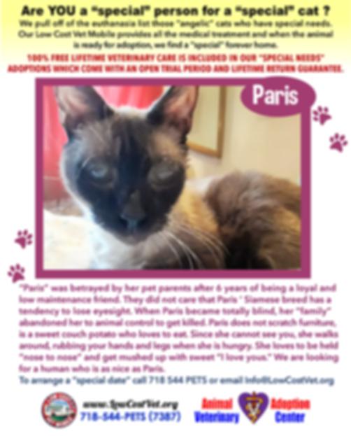 lcvm_special_needs_cats_PARIS_1.png