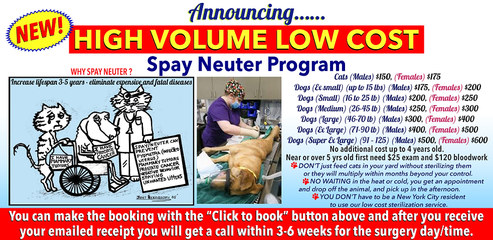 lcvm_high_volume_spay_neuter_november_20