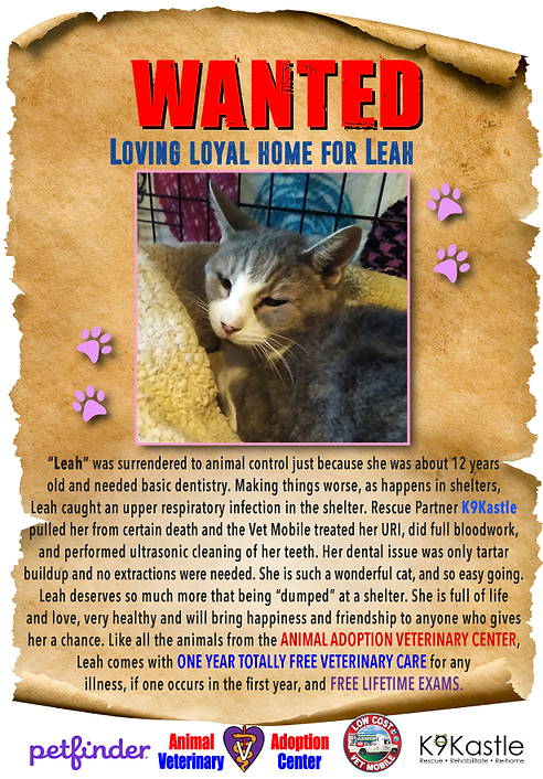 adopt_Leah_wanted.png