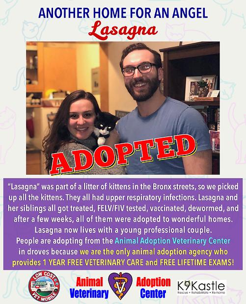 lasagna_adopted.png