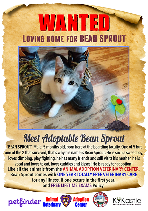 BEANSPROUT_WANTED_FLYER_1.png