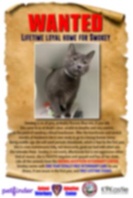 Smokey_wanted_adopter_poster_2.png