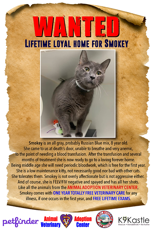 Smokey_wanted_adopter_poster_2.png