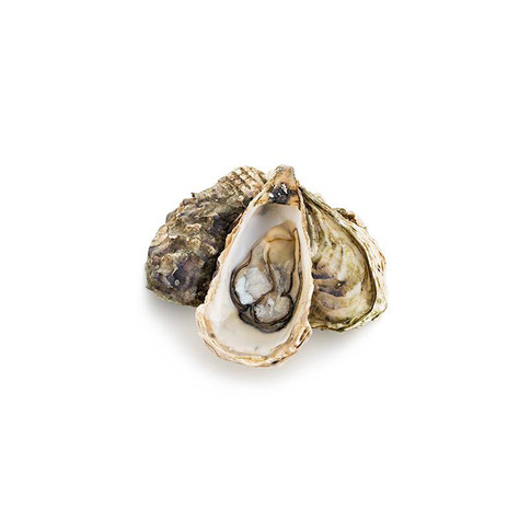 OYSTERS GRADE 4