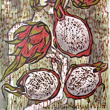 Dragonfruit 3