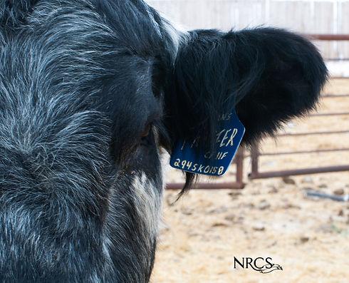 NRCS_0770.jpg