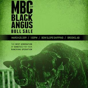 2019 MBC Black Angus Bull Sale