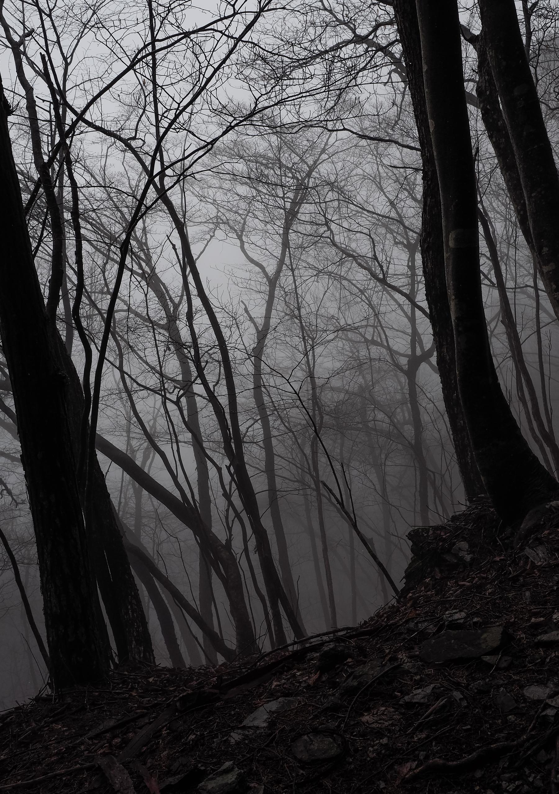 狼信仰で有名な三峯神社の奥之院へ向かう道
