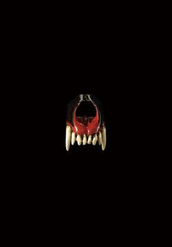 狼の上顎骨の根付