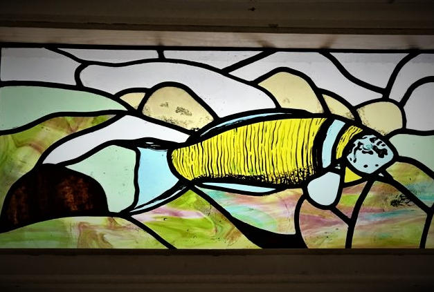 Fish window