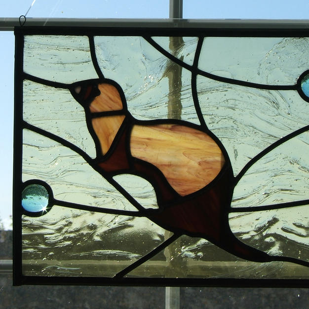 Ferret Window