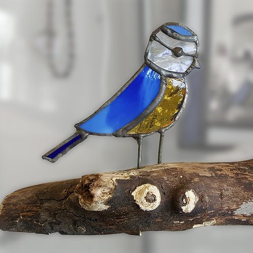 Blue Tit on Driftwood