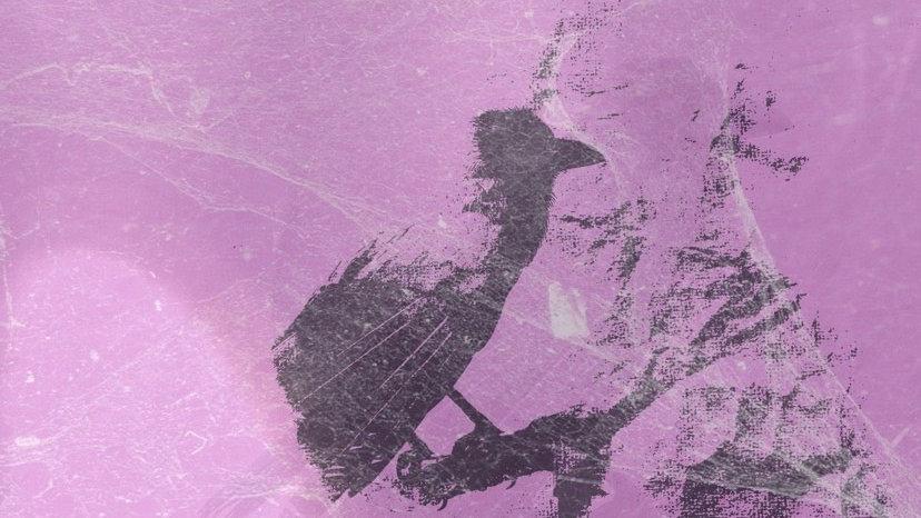 """Piet Onthel//Amitie 5"""" Split"""