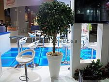 Ficus.jpeg