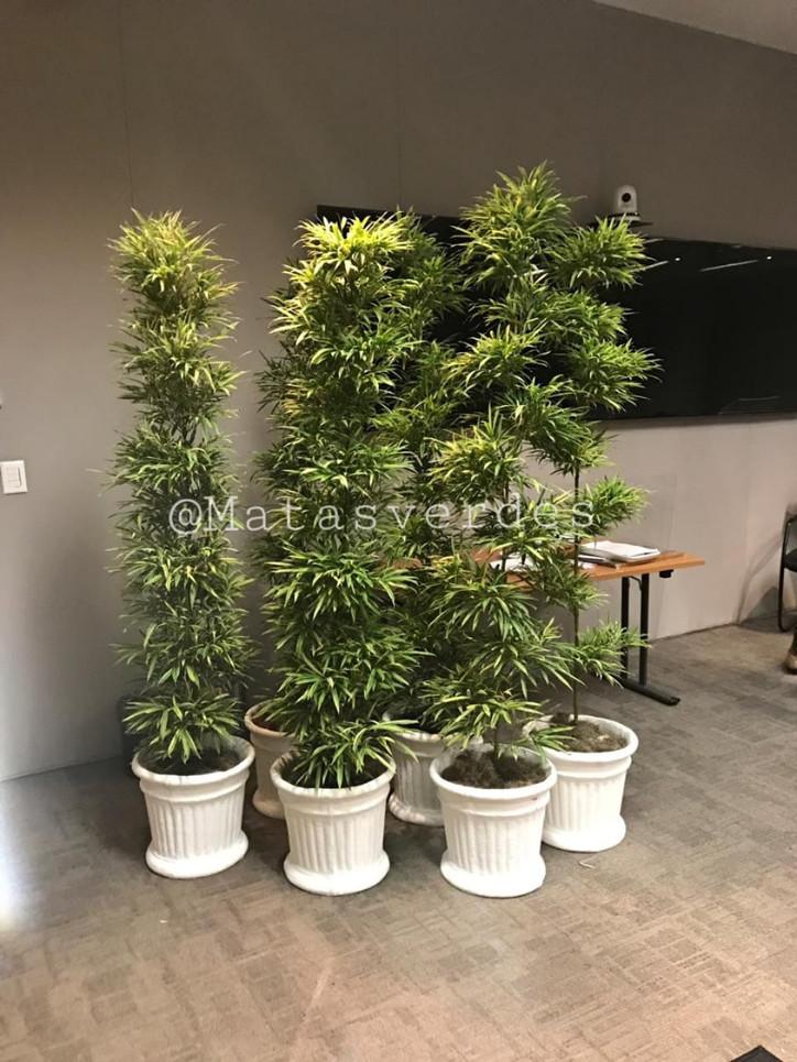 Bambuza.jpeg