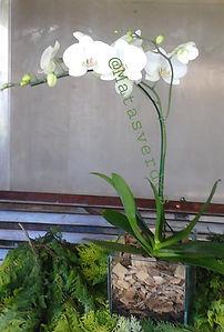 Arranjo com Orquidea branca.jpg