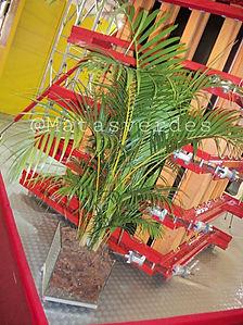Palmeira Areca.jpeg