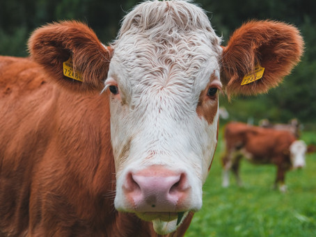 Cattle thieves kill 66 villagers in Nigeria