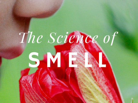 The Science of Smell